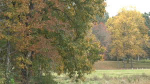 Trees with changing color leaves
