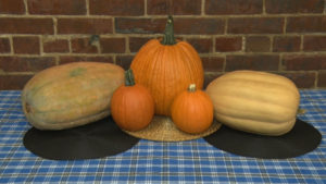 different sized pumpkins on a table